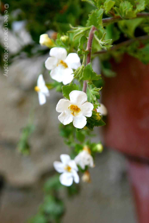 2-small-white-flowers-eileen-gano