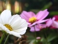 3-pink-and-white-spring-flowers-eileen-gano