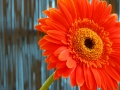 6-orange-flower-with-stem-eileen-gano