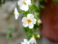 2-small-white-flowers-eileen-gano